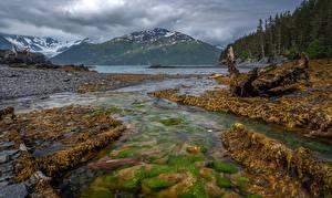 Fotos Vereinigte Staaten Alaska Berg Stein Flusse Wälder Whittier