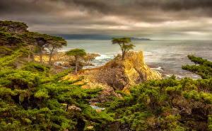 デスクトップの壁紙、、アメリカ合衆国、海岸、カリフォルニア州、雲、木、岩石、ハイダイナミックレンジ合成、自然