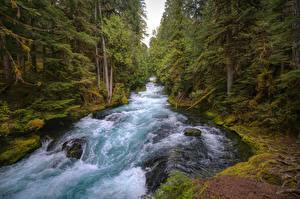Hintergrundbilder Vereinigte Staaten Fluss Steine Wald Laubmoose Mackenzie River, Oregon Natur