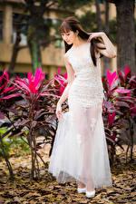 Bakgrundsbilder på skrivbordet Asiatisk Brunhårig tjej Klänning Unga_kvinnor