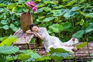 Bilder Asiaten Lotus Brünette Kleid junge frau