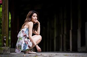 Bakgrundsbilder på skrivbordet Asiater Sitter Blick Brunhårig tjej Unga_kvinnor