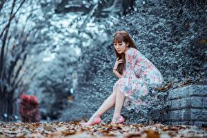 Bilder Herbst Asiatische Bokeh Braunhaarige Kleid Sitzt junge Frauen