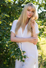 Bakgrundsbilder på skrivbordet Carla Monaco Blond tjej Poserar Klänning Händer Grenar Blick ung kvinna