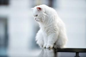 Fotos & Bilder Katze Bokeh Sitzend Weiß Flaumig Tiere