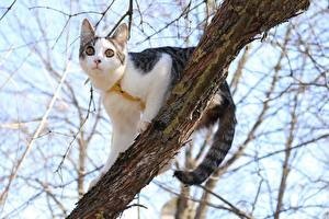Image Cat Branches Glance