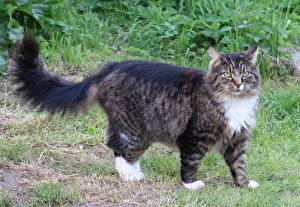 Image Cat Grass Glance