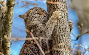 Photo Cats Trunk tree Paws Wildcat Animals