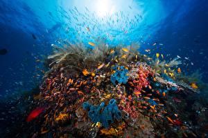 Fonds d'écran Corail Monde sous-marin Poisson