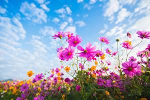 Bilder Schmuckkörbchen Himmel Wolke Blumen