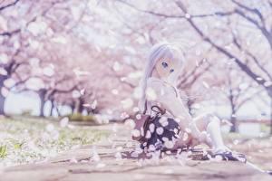 Bakgrundsbilder på skrivbordet Docka Blond tjej Sitter Vacker Sakura Unga_kvinnor