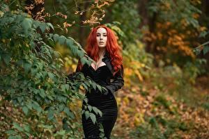 Hintergrundbilder Georgiy Dyakov Ast Kleid Rotschopf Dekolletee Starren Unscharfer Hintergrund junge frau