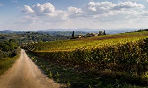 Hintergrundbilder Italien Straße Rebberg Toskana Natur