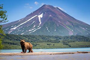 Image Kamchatka Peninsula Russia Lake Mountains Bear Brown Bears Kurile Lake, South Kamchatka reserve Nature