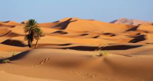 Bilder Marokko Wüste Sand Palmengewächse Fußabdrücke Erg Chebbi