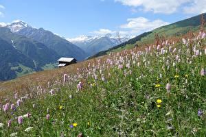 Bureaubladachtergronden Berg Zwitserland Grasland Gras Grisons