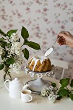 Bureaubladachtergronden Cake Koffie Syringa Een lepel Mok Beker Voedsel Bloemen