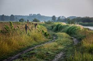 Bilder Straße Sommer Morgen Gras Natur
