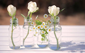 Wallpaper Roses Camomiles Bottle Three 3 White flower