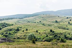 Pictures Slovakia Sheep Hill Horizon Herd Tatra Nature