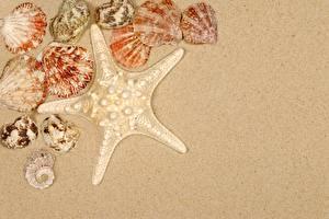 Fotos & Bilder Seesterne Muscheln Sand Vorlage Grußkarte Städte
