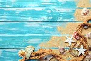 Wallpapers Starfish Shells Summer Boards Sand Template greeting card Rope