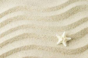 Photo Sea stars Texture Sand