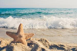 Papel de Parede Desktop Verão Mar Ondas Estrela-do-mar Areia Fundo desfocado