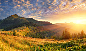 Picture Sunrises and sunsets Forests Scenery Grass Rays of light Hill Nature
