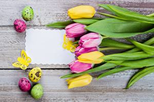 Pictures Tulip Easter Template greeting card Eggs Boards Flowers