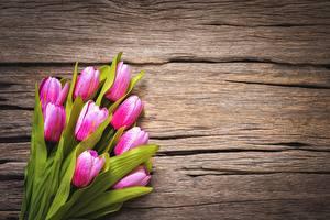 Hintergrundbilder Tulpen Rosa Farbe Vorlage Grußkarte Blüte