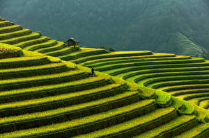 Fotos Vietnam Berg Acker Mu Cang Chai, rice terraces Natur