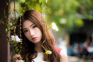 Wallpaper Asiatic Bokeh Brown haired Glance