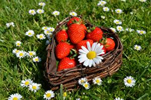 Wallpapers Berry Matricaria Strawberry Grass Wicker basket Heart flower