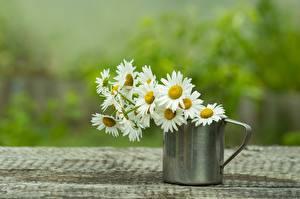 Fotos Kamillen Blumensträuße Becher Unscharfer Hintergrund Blumen