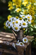 Photo Matricaria Vase Blurred background