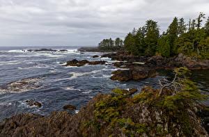 Fotos Kanada Küste Ozean Felsen Bäume Ucluelet, British Columbia