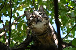 Pictures Cat Staring Whiskers Branches Snout
