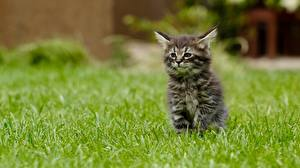 Wallpapers Cat Grass Kittens Bokeh Sitting Animals