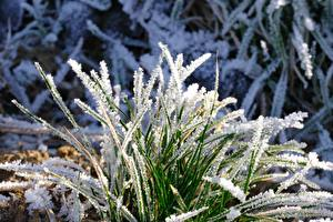 Pictures Closeup Grass Frost
