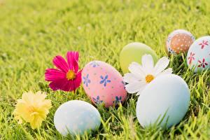 Sfondi desktop Pasqua Uovo Erba