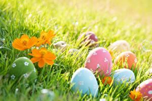 Sfondi desktop Pasqua Uovo Erba Natura