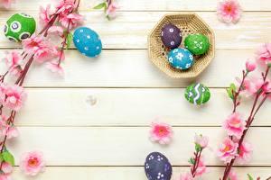 Tapety na pulpit Wielkanoc Jajko Deski Szablon kartkę z życzeniami Gałęzie
