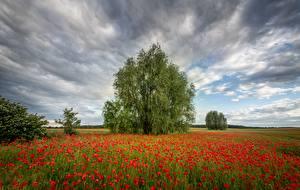 Hintergrundbilder Felder Sommer Mohnblumen Bäume Wolke Natur