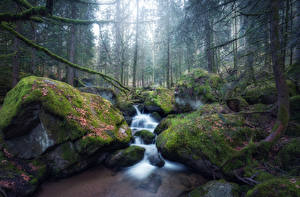Pictures Forest Waterfalls Stone Moss Stream Nature