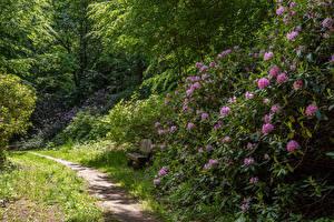 Bakgrunnsbilder Tyskland Alperose Park Busker En sti Hagebenk Wiesenburg Castle Park Natur