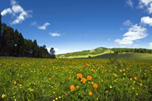 Bureaubladachtergronden Grasland Bos Hemelgewelf Boterbloem Gras
