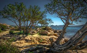 Fotos Italien Küste Steine Bäume Olbia, Sardegna Natur