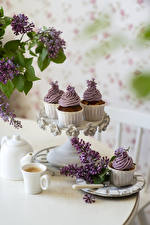 Wallpapers Syringa Still-life Coffee Cappuccino Fairy cake Branches Cup Food