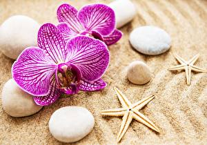 Bilder Orchidee Stein Seesterne Sand Blumen
